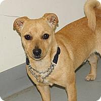 Adopt A Pet :: Spike - York, SC