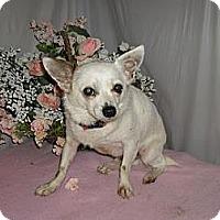 Adopt A Pet :: Ceasar - Chandlersville, OH