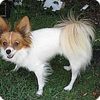 Adopt A Pet :: Skippy - San Diego County, CA