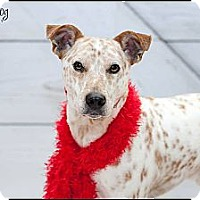Adopt A Pet :: Speckles - Hilliard, OH