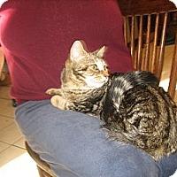 Adopt A Pet :: Fawn - Portland, ME