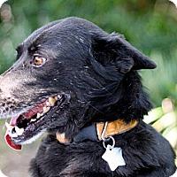 Adopt A Pet :: Nyx - New Orleans, LA