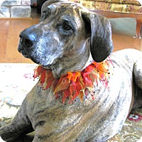 Adopt A Pet :: Lady - York, PA