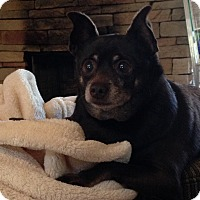 Adopt A Pet :: Coleman - Homewood, AL