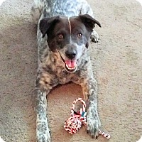 Adopt A Pet :: Mabel - Los Angeles, CA