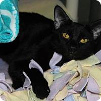 Adopt A Pet :: Keeyah - Mission, KS