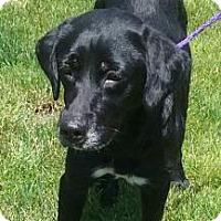 Adopt A Pet :: Matilda - Ashtabula, OH