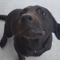 Adopt A Pet :: Fidget - Savannah, TN