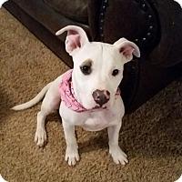 Adopt A Pet :: Sadie - Wichita Falls, TX