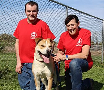 Labrador Retriever Mix Dog for adoption in Elyria, Ohio - Baron
