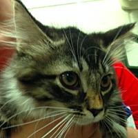 Adopt A Pet :: Chubbie - Alexandria, VA