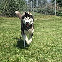Adopt A Pet :: Mishka - Harvard, IL