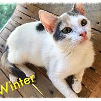 Adopt A Pet :: Winter MKK - Albany, NY