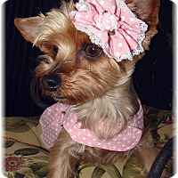 Adopt A Pet :: Diamond - Palm City, FL