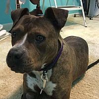 Adopt A Pet :: Talisha - Flint, MI