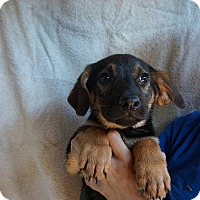 Adopt A Pet :: Buzz - Oviedo, FL