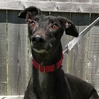 Adopt A Pet :: TNT TAILSPIN - Grandville, MI