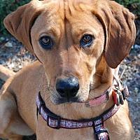 Adopt A Pet :: ANNIE (ROWAN) - Powder Springs, GA