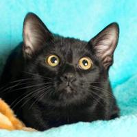 Adopt A Pet :: Cloe - Santa Fe, TX