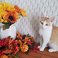 Adopt A Pet :: Apricot - Covington, KY