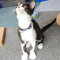Adopt A Pet :: Harlow - Columbus, OH