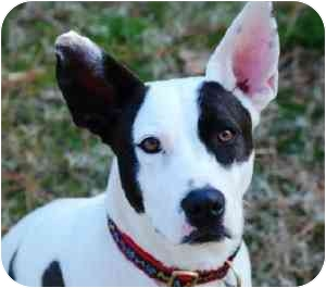 Terrier (Unknown Type, Medium) Mix Dog for adoption in Wake Forest, North Carolina - Moxie