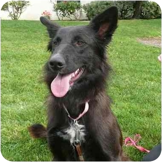 Border Collie Mix Dog for adoption in San Clemente, California - HONEY