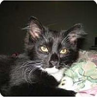 Adopt A Pet :: Evangeline - Shelton, WA
