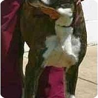 Adopt A Pet :: Cassio - Albany, GA
