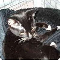 Adopt A Pet :: Lola - Mission, BC