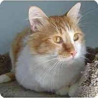 Adopt A Pet :: Wilbur - Modesto, CA