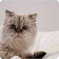 Adopt A Pet :: Kylie - Beverly Hills, CA