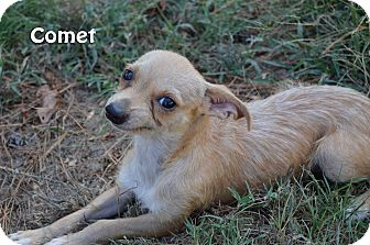 Terrier (Unknown Type, Small) Mix Dog for adoption in Texarkana, Arkansas - Comet