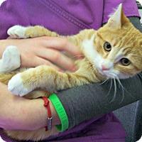 Adopt A Pet :: Buttercup - Toledo, OH