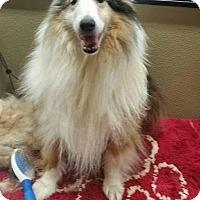 Adopt A Pet :: Kasey/k.C. - COLUMBUS, OH