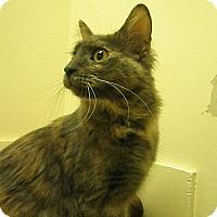 Adopt A Pet :: Corazella - Milwaukee, WI