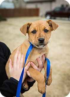 Terrier (Unknown Type, Medium)/Terrier (Unknown Type, Medium) Mix Puppy for adoption in Hershey, Pennsylvania - Layla