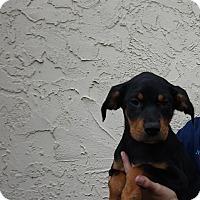 Adopt A Pet :: Chevy - Oviedo, FL