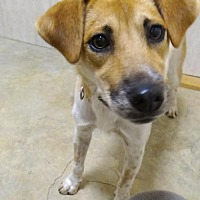 Adopt A Pet :: Polly - Holly Springs, MS
