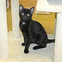 Adopt A Pet :: Hershey - Denver, CO