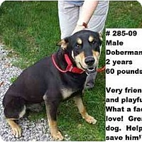Adopt A Pet :: # 285-09 @ Animal Shelter - Zanesville, OH