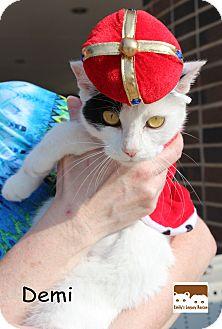 Domestic Shorthair Cat for adoption in Wichita Falls, Texas - Demi