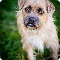 Adopt A Pet :: Alfalfa - Santa Barbara, CA