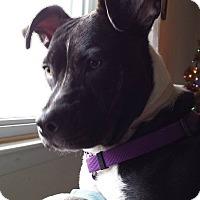 Adopt A Pet :: Cleopatra - Toms River, NJ
