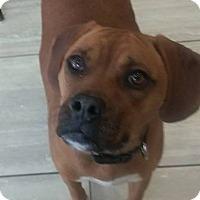 Adopt A Pet :: Bricktown NJ - Sammie - New Jersey, NJ