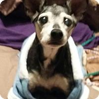 Adopt A Pet :: Ginger - Jackson, TN