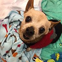 Adopt A Pet :: Clyde - Valencia, CA