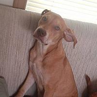 Adopt A Pet :: Cinnamon - Joshua, TX