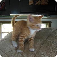 Adopt A Pet :: Tigger - Olivet, MI