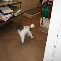 Adopt A Pet :: OREO - Aurora, IL